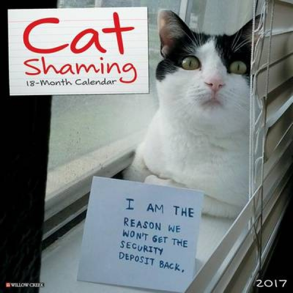 Cat Shaming 9781682343418 Willow Creek Press Calendar New Book Free UK Delivery